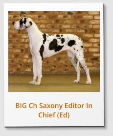 BIG Ch Saxony Editor In Chief (Ed)